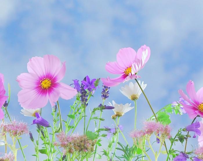 Profumi e colori….Arrivano i fiori!