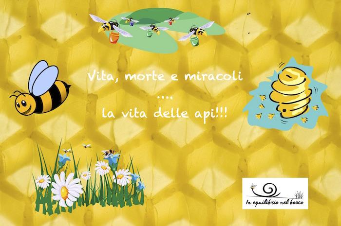 vita, morte e miracoli…La vita delle api…